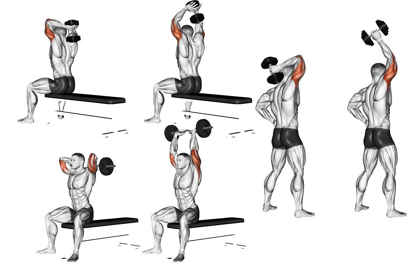 triceps frances execucao halter barra unilateral capa