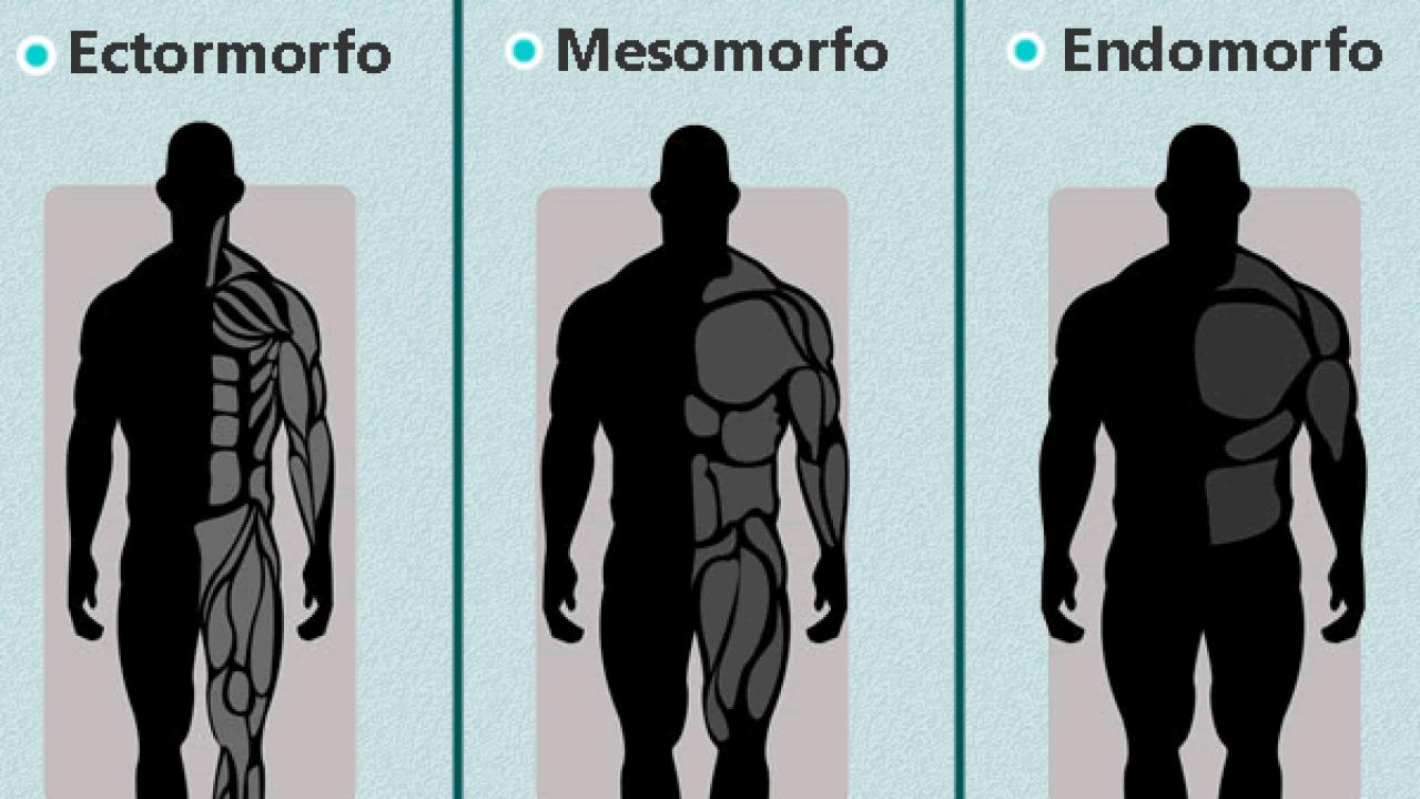 ectomorfo-mesomorfo-e-endomorfo